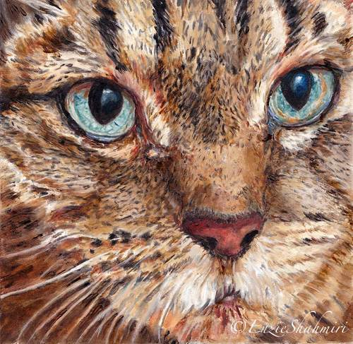 Tabby Cat Portrait Bailey